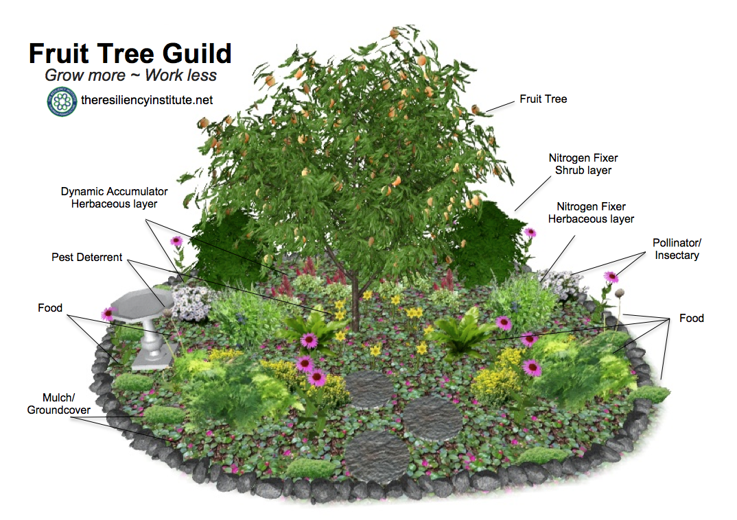 Edible Landscapes, Permaculture, Landscaping, Urban Farming, Urban Farmer, Community Garden,