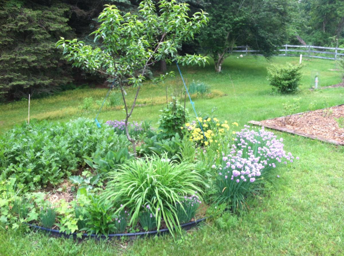 Organic Edible Landscaping Design Texas Edible Landscapes